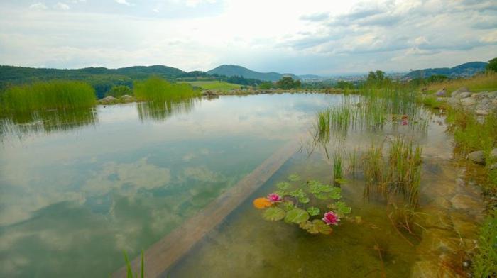 piscine-biologique-superbe-et-nénuphars-fleuris