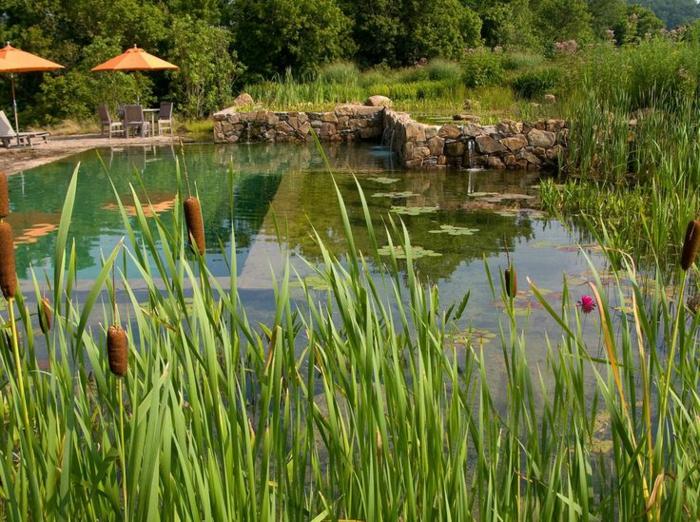 piscine-biologique-un-grand-bassin-organique-et-chaises-longues