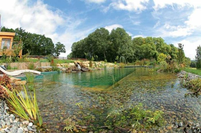piscine-biologique-une-grande-zone-de-régénération