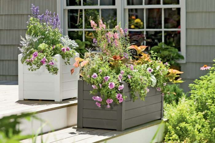 pot-de-fleurs-idée-jardin-plantes-fenetres