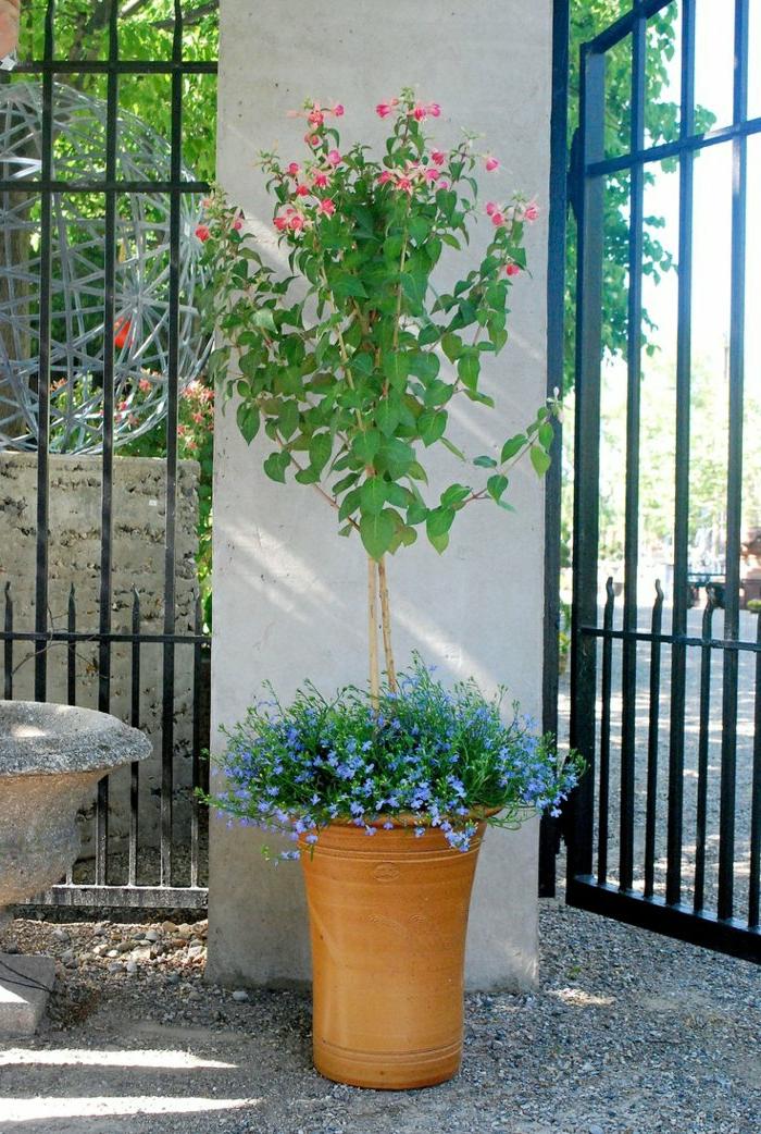 pot-fleur-jardin-verte-plantes-devant-la-maison