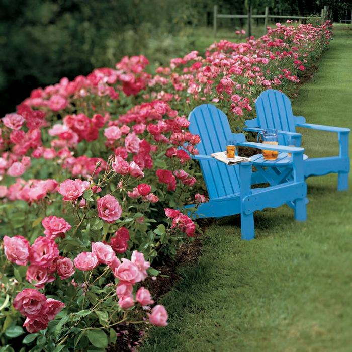 arbuste-de-haie-fleurie-extérieur-roses-chaise-longue-la-rose-de-jardin