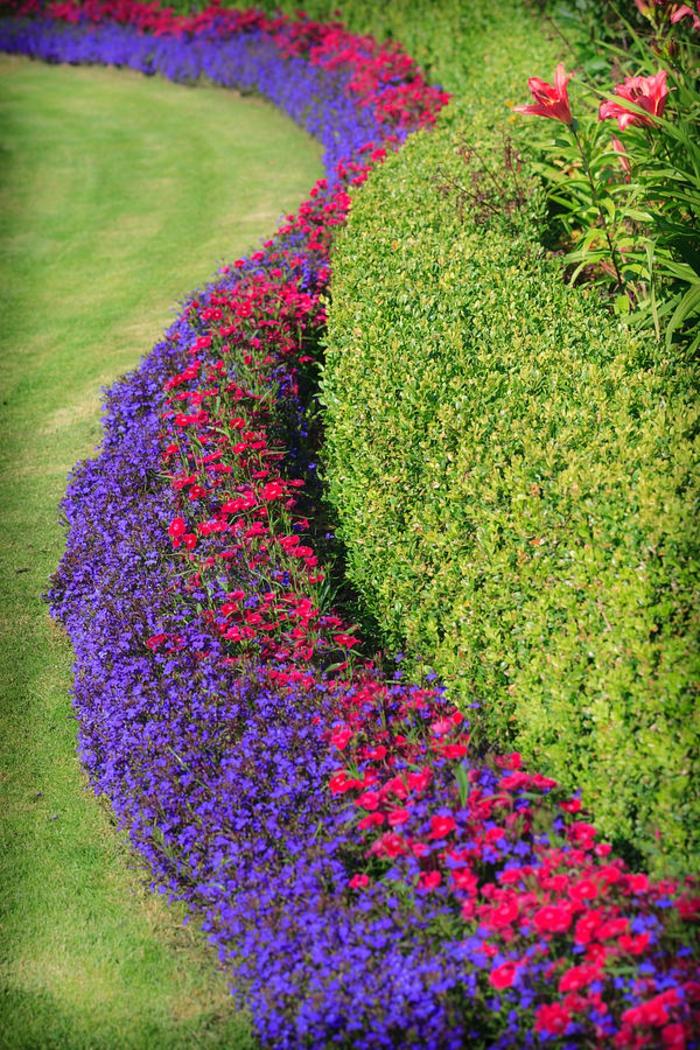 arbuste-de-haie-fleurie-extérieur-beau-chemin-fleurs-colorées