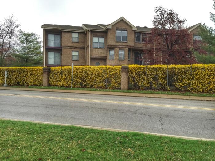 arbuste-de-haie-fleurie-extérieur-maison-landscape
