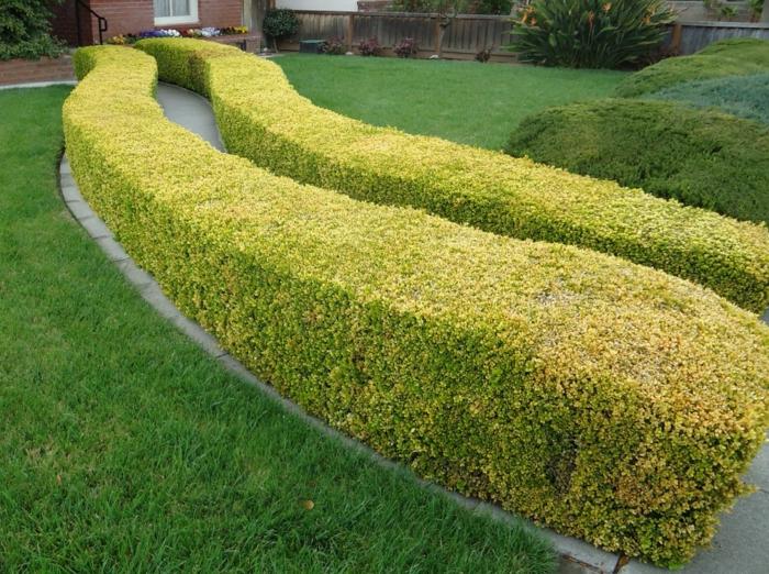 haie-avec-fleurs-le-vert-idée-jardin -deux-chemins-maison