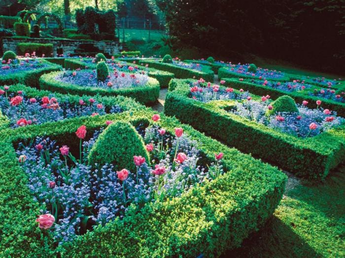 haie-avec-fleurs-le-vert-idée-jardin-fleurs-arbustes