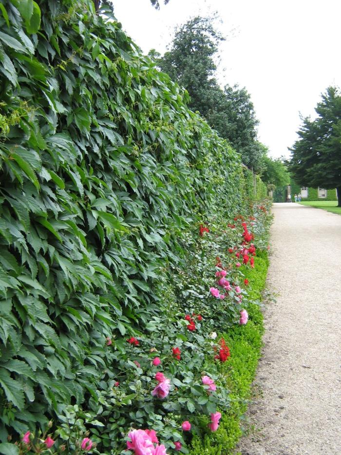 haie-avec-fleurs-le-vert-idée-jardin-ligne-flower