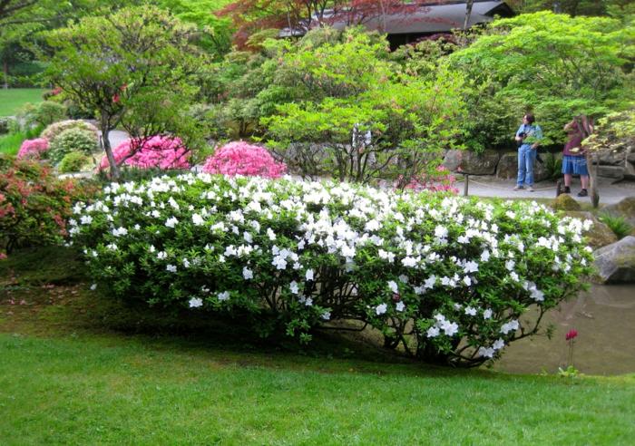 haie-fleurie-kit-haies-fleuries-buisson-fleurs-jardin