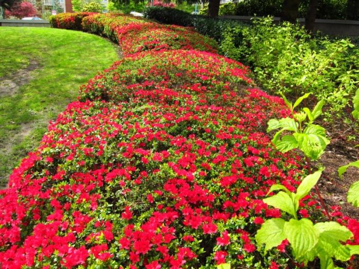 haie-persistant-fleurie-jardin-extérieur-cloture