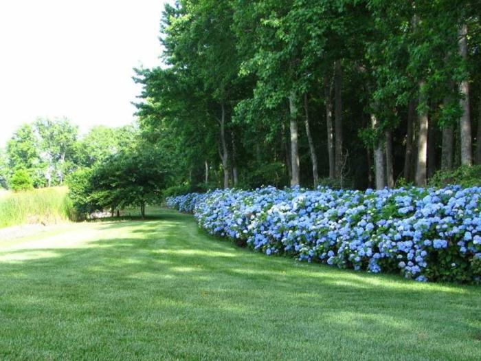 haies-fleuries-kit-haie-fleurie-arbres-et-arbrisseaux