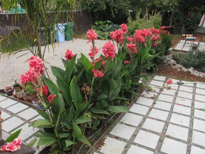 le-haie-fleurie-toute-l-année-fleurs-de-jardin
