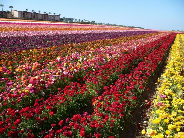 les-arbuste-fleurs-jaunes-fleurs-de-jardin-agriculture