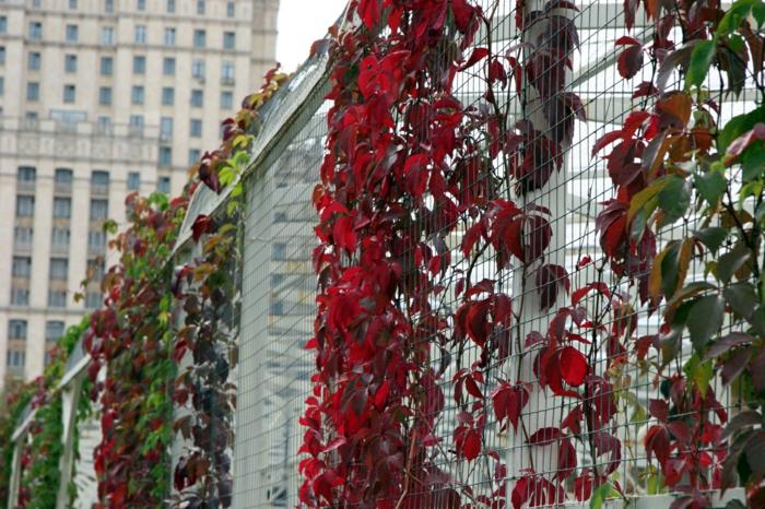les-arbuste-fleurs-jaunes-haie-fleurie-new-york