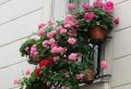Découvrir comment avoir un balcon fleuri en 50 photos!