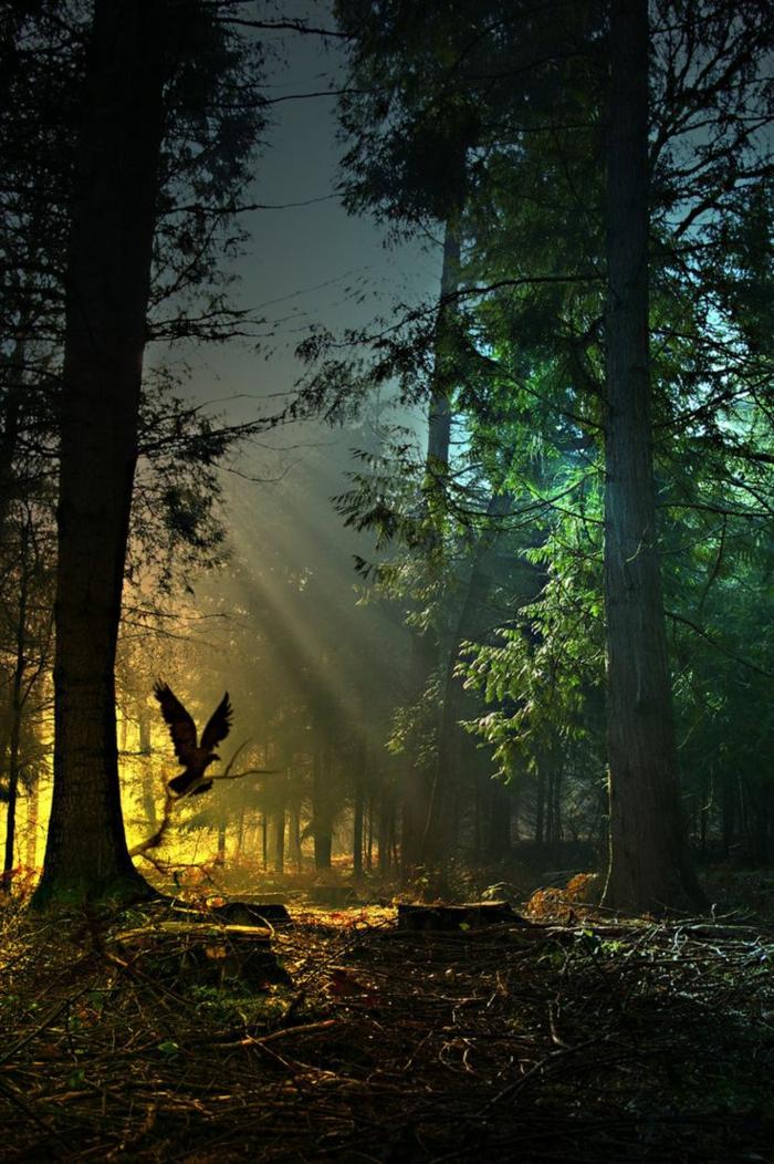 1-fond-d-ecrans-hd-avec-une-jolie-photo-de-la-foret-avec-beaucoup-d-arbres-verts