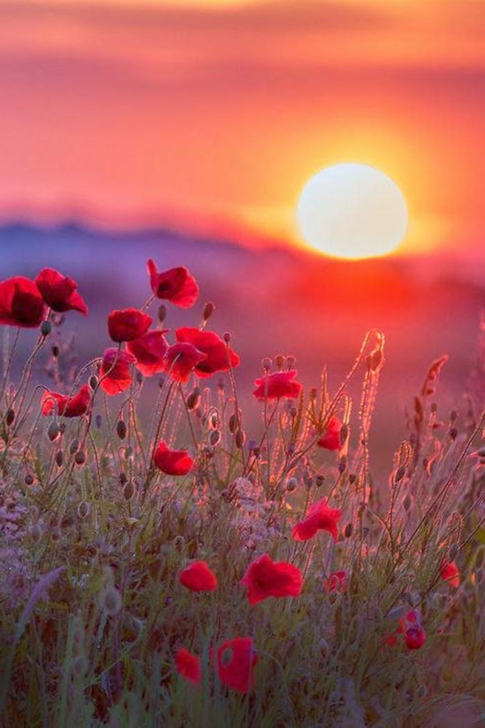 1-les-plus-beaux-fonds-d-écran-paysage-avec-couche-de-soleil