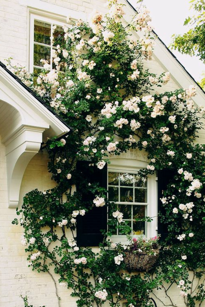 fleurs blanches grimpantes. Black Bedroom Furniture Sets. Home Design Ideas