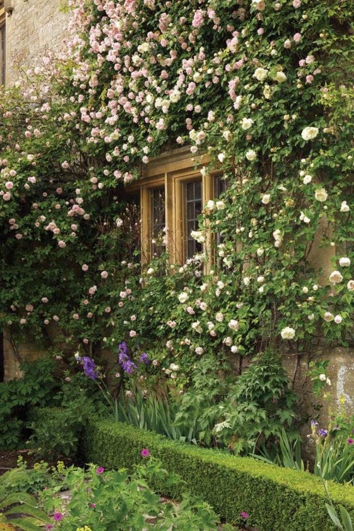 1-maison-avec-plantes-grimpantes-mur-en-fleurs-roses-blanches-décoration-extérieur-roses