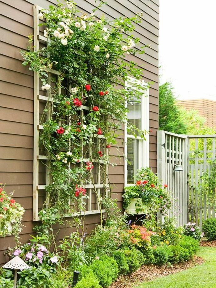 Les Plantes Grimpantes, Beaucoup D'idées Pour Le Jardin