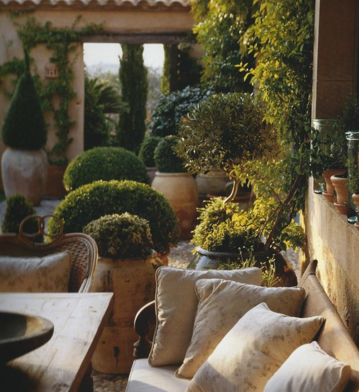 1-plante-grimpante-en-pot-plante-grimpante-extérieur-meubles-de-jardin-haie-de-jardin