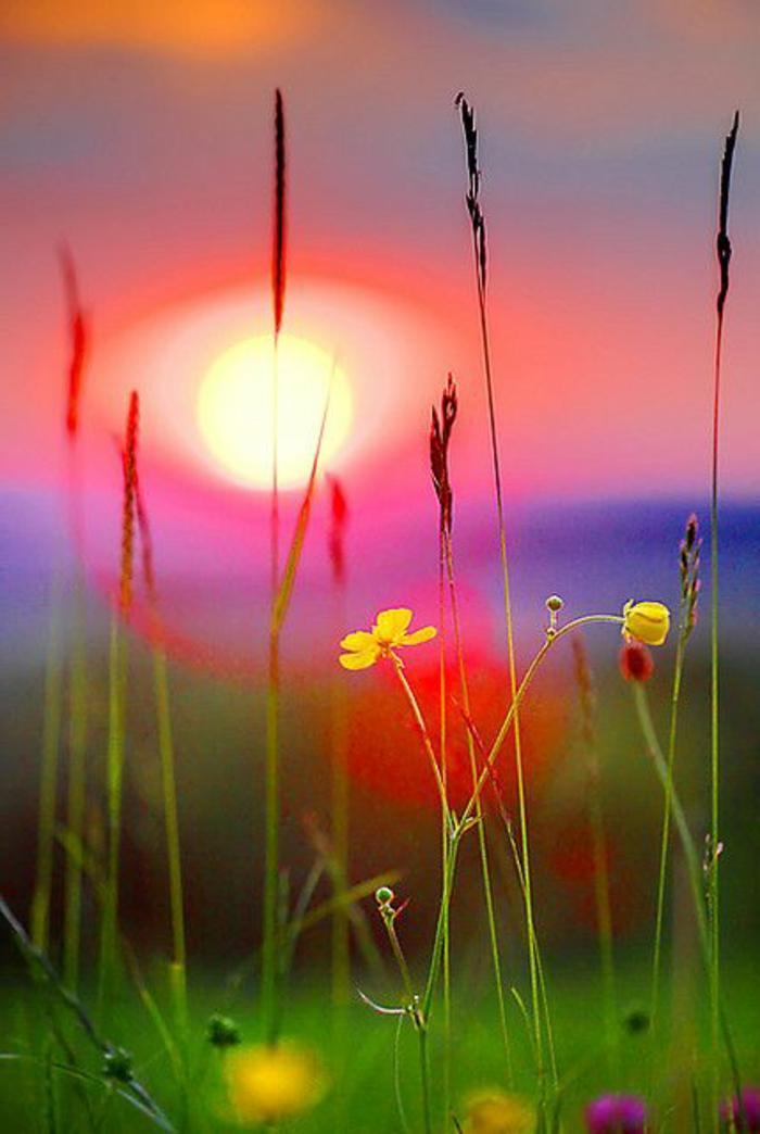 1-quel-fond-d-écran-paysage-gratuit-hd-choisir-avec-un-couche-de-soleil