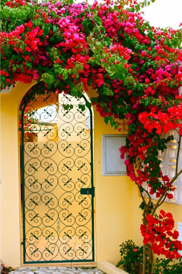 1-un-joli-jardin-plante-grimpante-ombre-plantes-grimpantes-rouges-porte-d-extérieur-en-fer-forgé
