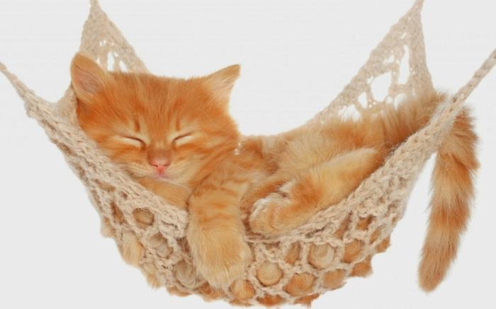 Un hamac pour chat va donner grand confort votre animal - Pourquoi un chat fait pipi sur le lit ...