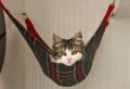 Un hamac pour chat va donner grand confort à votre animal
