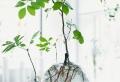 Lе vase en verre – un joli détail de la déco