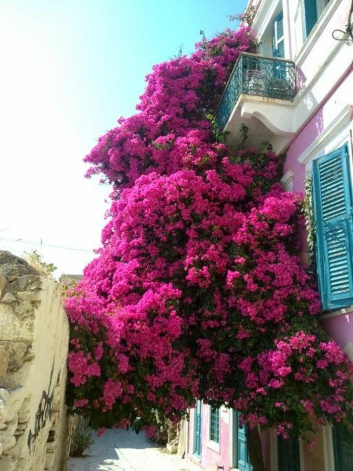 beaucoup-de-fleurs-pour-la-terrasse-de-vos-reves-fleurs-rue-avec-beaucoup-de-fleurs