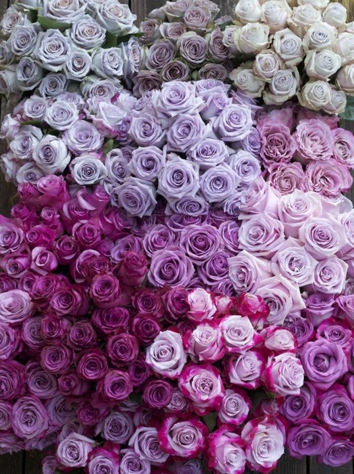 la signification des roses quelle couleur de roses offrir. Black Bedroom Furniture Sets. Home Design Ideas