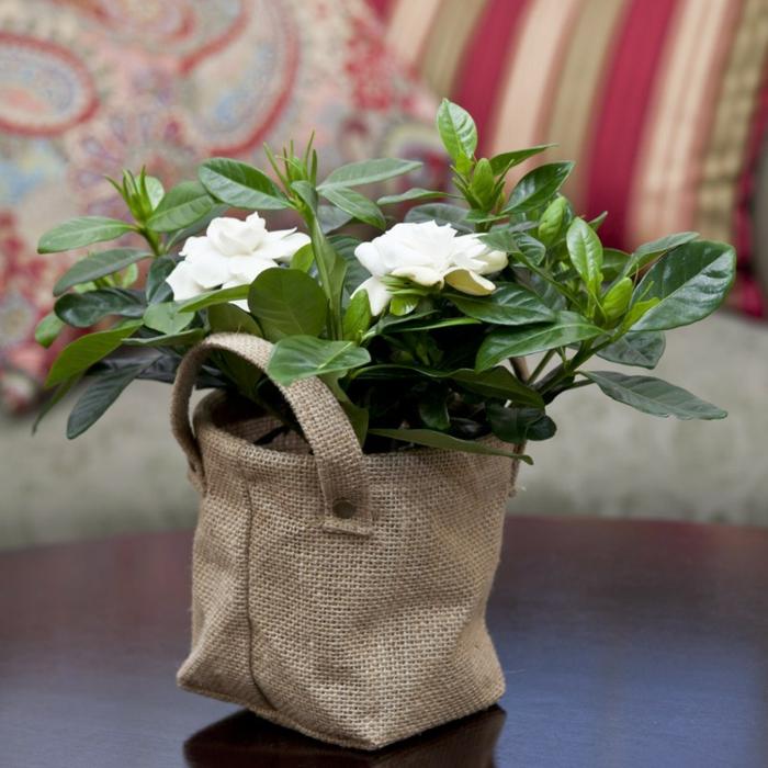 Fleur pour jardin pas cher 2015 artificielle en for Fleurs artificielles en pot pas cher