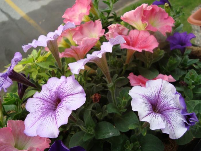 comment-avoir-un-balcon-fleuri-comment-fleurir-son-balcon-avec-fleurs