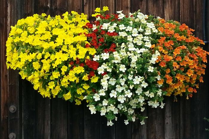 comment-choisir-les-fleurs-pour-avoir-un-balcon-fleuri