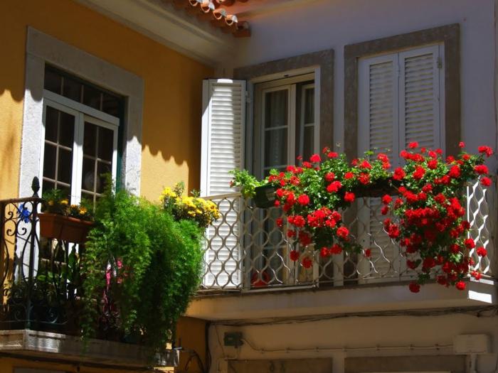 comment-fleurir-son-balcon-avec-pélargonium-de-couleur-rouge-pélargonium-rouge-d-extérieur