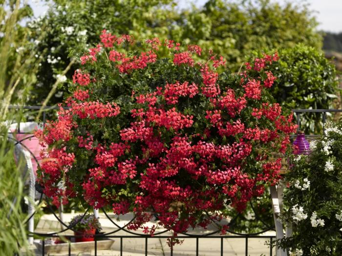 comment-fleurir-son-balcon-fleur-d-extérieur-idee-deco-pour-le-balcon-fleuri