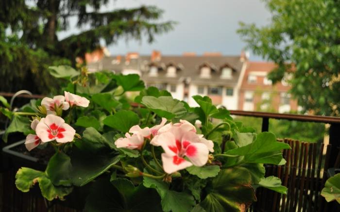 fleurs-pour-balcon-quelle-fleur-choisir-pour-le-balcon-idee-deco-terrasse