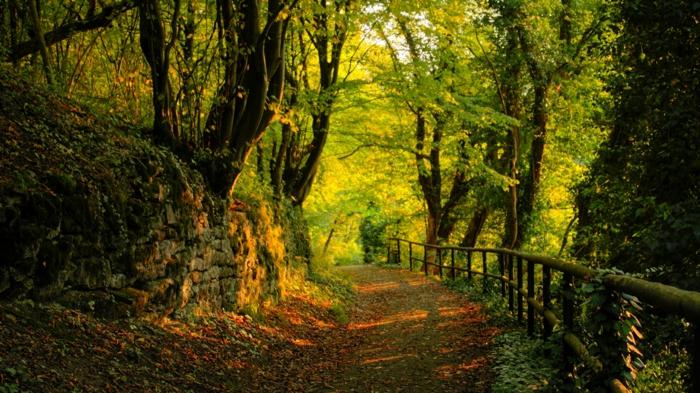 fond-d-ecrans-hd-avec-une-jolie-photo-de-la-montagne-avec-beaucoup-d-arbres-verts