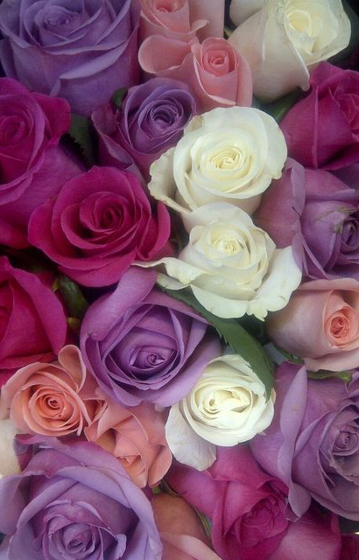 gros-bouquet-de-fleurs-signification-des-roses-rouge-violet-blanc