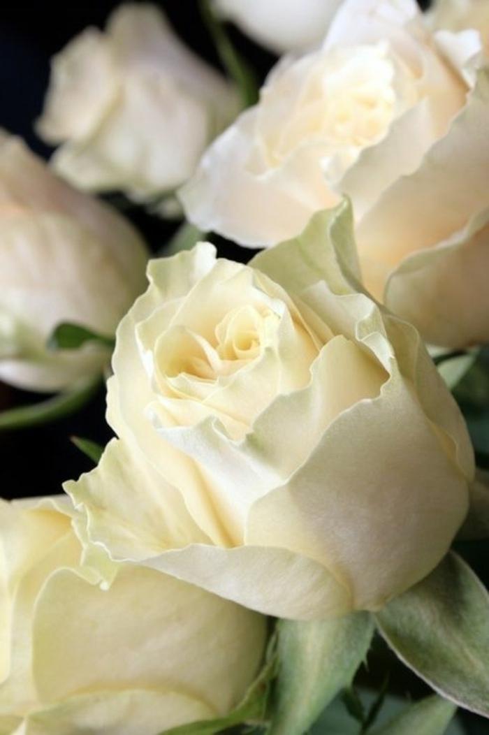 la-rose-blanche-quelle-est-la-signification-de-la-rose-blanche-bouquet-de-fleurs