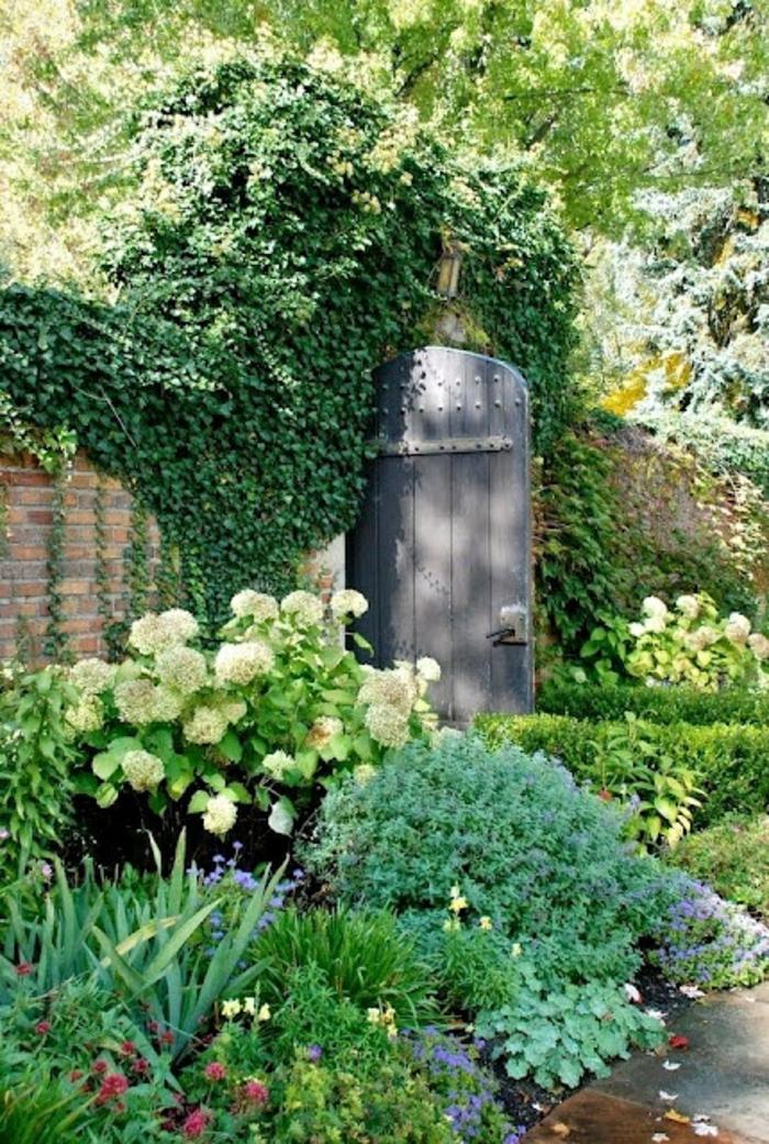Les plantes grimpantes beaucoup d 39 id es pour le jardin for Plante decorative jardin