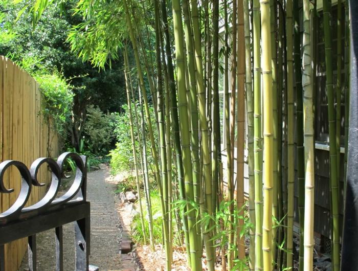 planter-des-bambous-comme-cloture-autour-de-la-maison