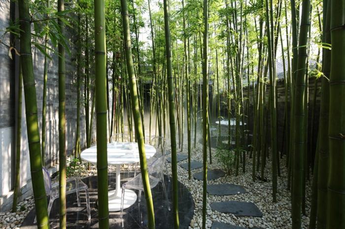 planter-des-bambous-comme-décoration-de-la-cour