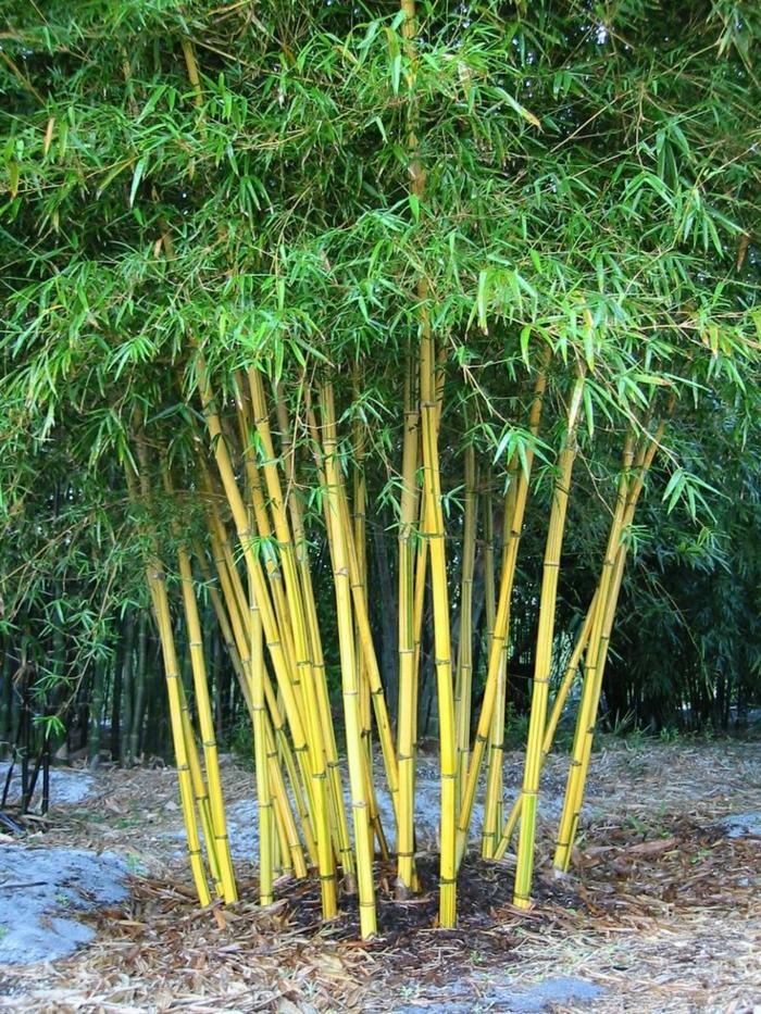 Comment planter des bambous dans son jardin - Comment trouver de l or dans son jardin ...