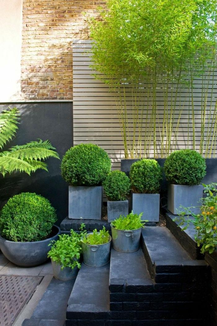 planter-des-bambous-des-plantes-vertes-en-pots