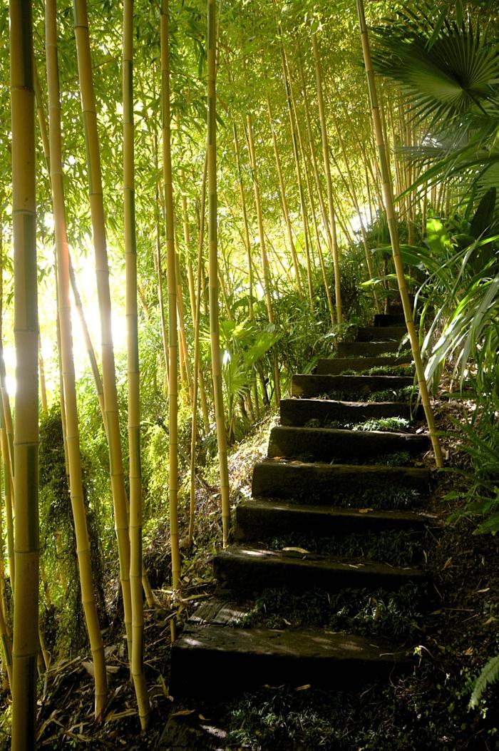 planter-des-bambous-près-d'un-escalier-idées-magnifique