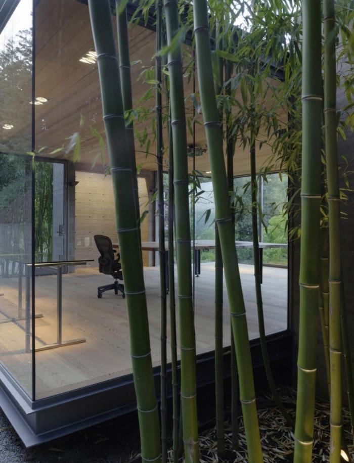 planter-des-bambous-près-de-l'abri-de-jardin