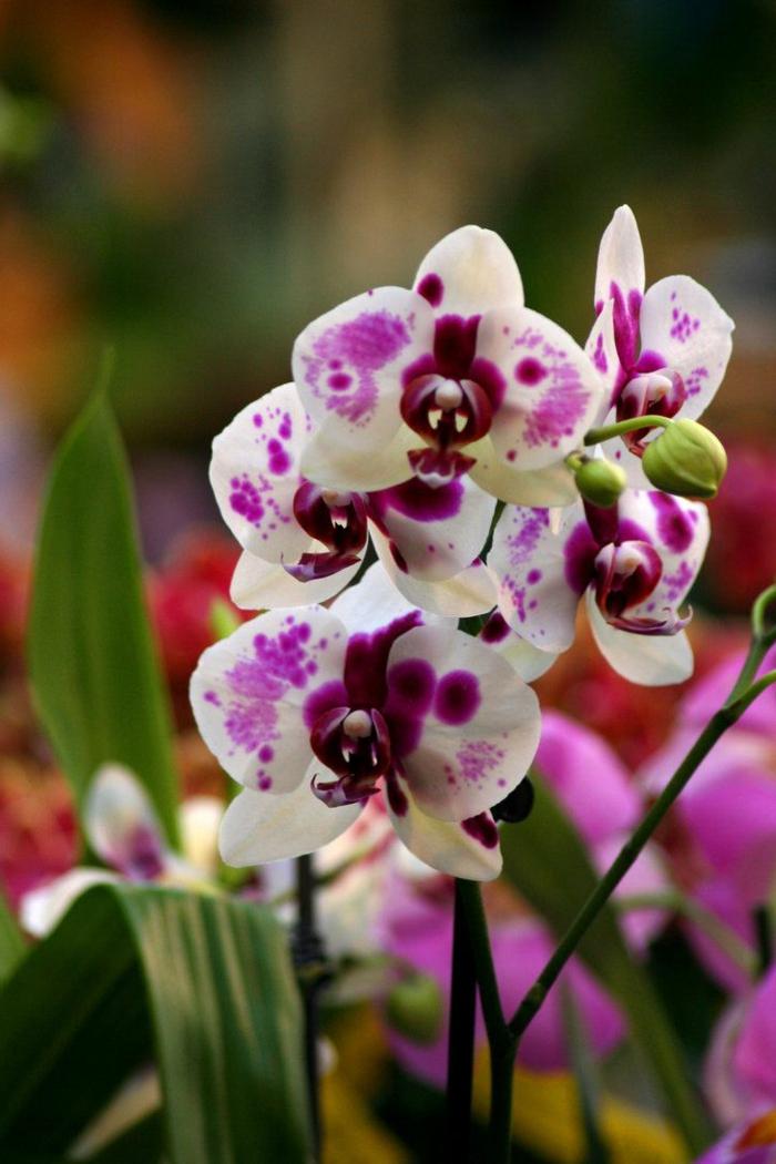 0-orchidées-blanches-dans-le-salon-moderne-comme-un-joli-mode-de-decoration-avec-fleurs