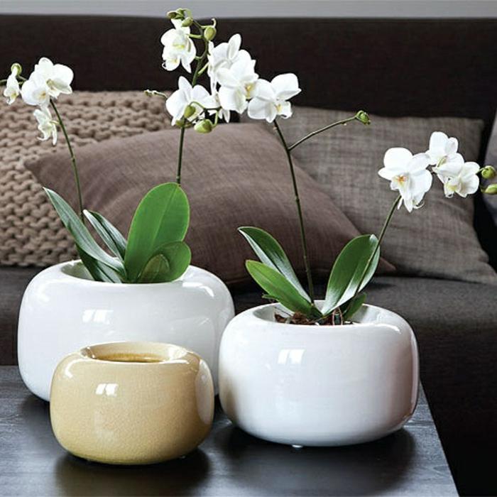 orchidee salon