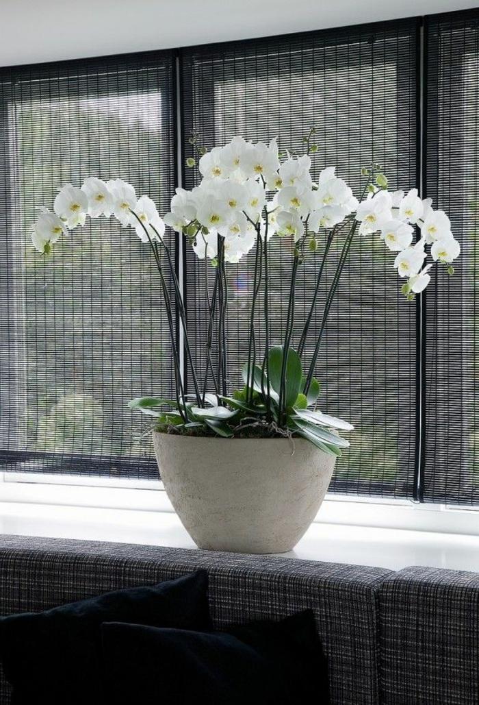 1-comment-faire-refleurir-une-orchidée-blanche-fleurs-d-intérieur-comme-decoration